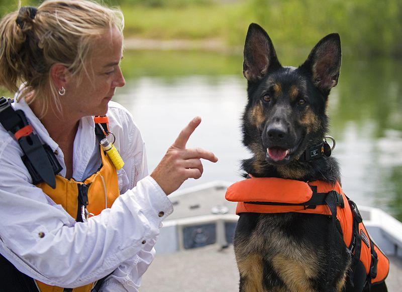 Img perros rescate dia internacional