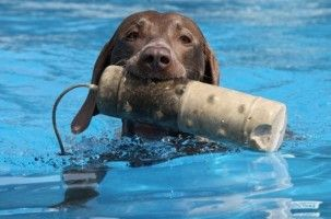 Img perros salvamentos martitimos rescates mar animales mascotas art