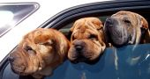 Img perros sedentarismo salud