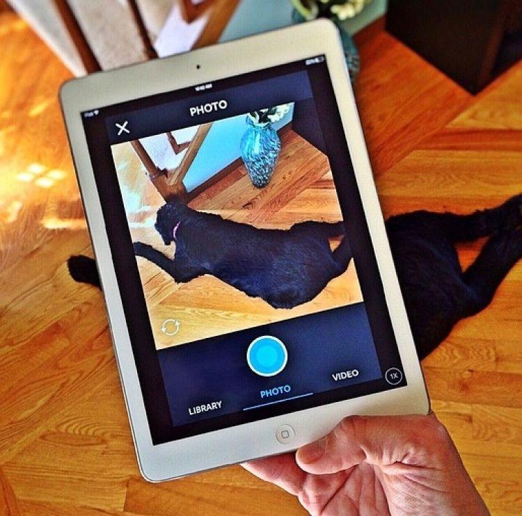 Img perros selfies apps art