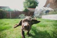 img_perros sin correa listado