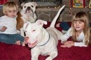 img_perros sociables navidad ninos visitas reuniones listado