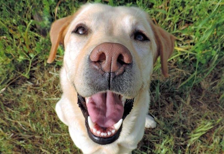 Img perros sonrien rien art
