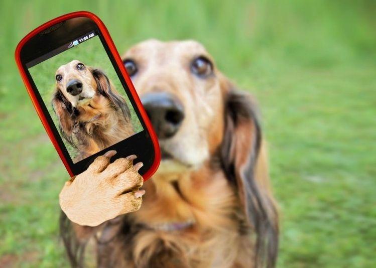 Img perros telefono aplicaciones fotografia art