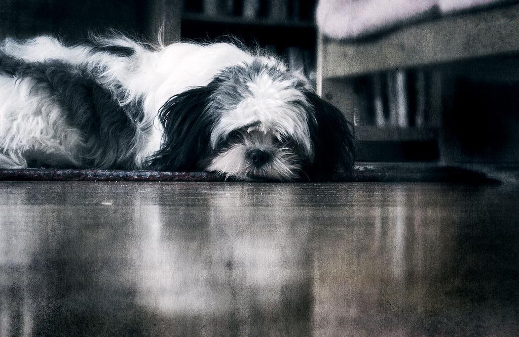 Img perros timidos educar