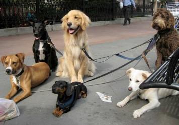 Img perros tirar correas art
