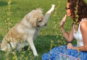 Img perros tramites obligatorios ley microchip seguros censo animales mascotas art