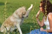 Img perros tramites obligatorios ley microchip seguros censo animales mascotas listado