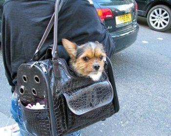 Img perros viajar ciudades art