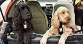 Img perros viajar coches