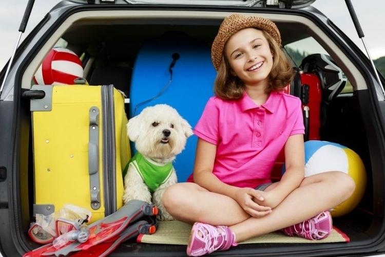 Img perros viajar coches grande