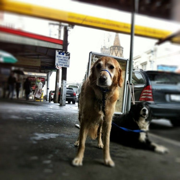 Img perros viajar tren 3 art