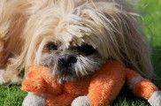 Img perros vomita vomitos que hacer consejos alimentacion animales mascotas listado