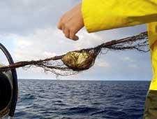Img pesca