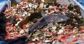 Img pesca sobreexplotacion mares