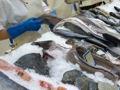 Img pescaderia rec1