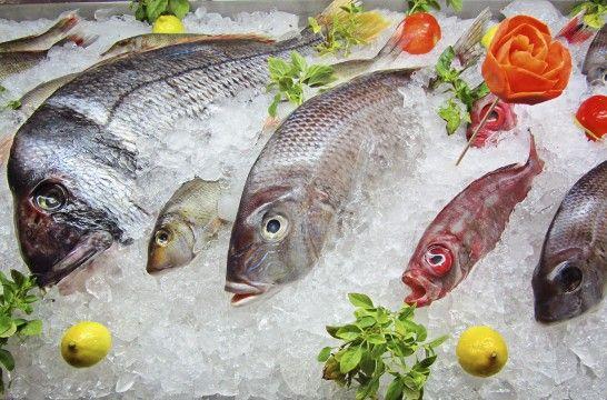 Img pescado fresco sa listg