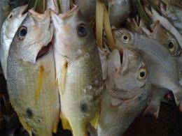 Img pescado01