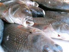 Img pescado1