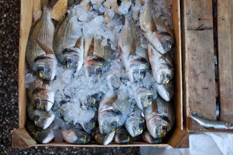 Img pescadoenhielo art