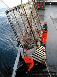 Img pescadores002