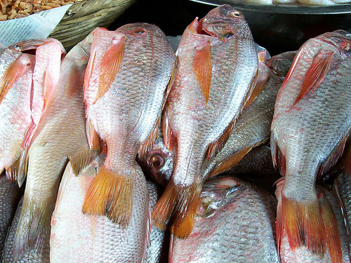 Img pescados