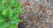 Img piedras jardin