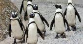 Img pinguinos