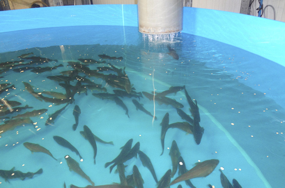 Img piscicultura azti hd