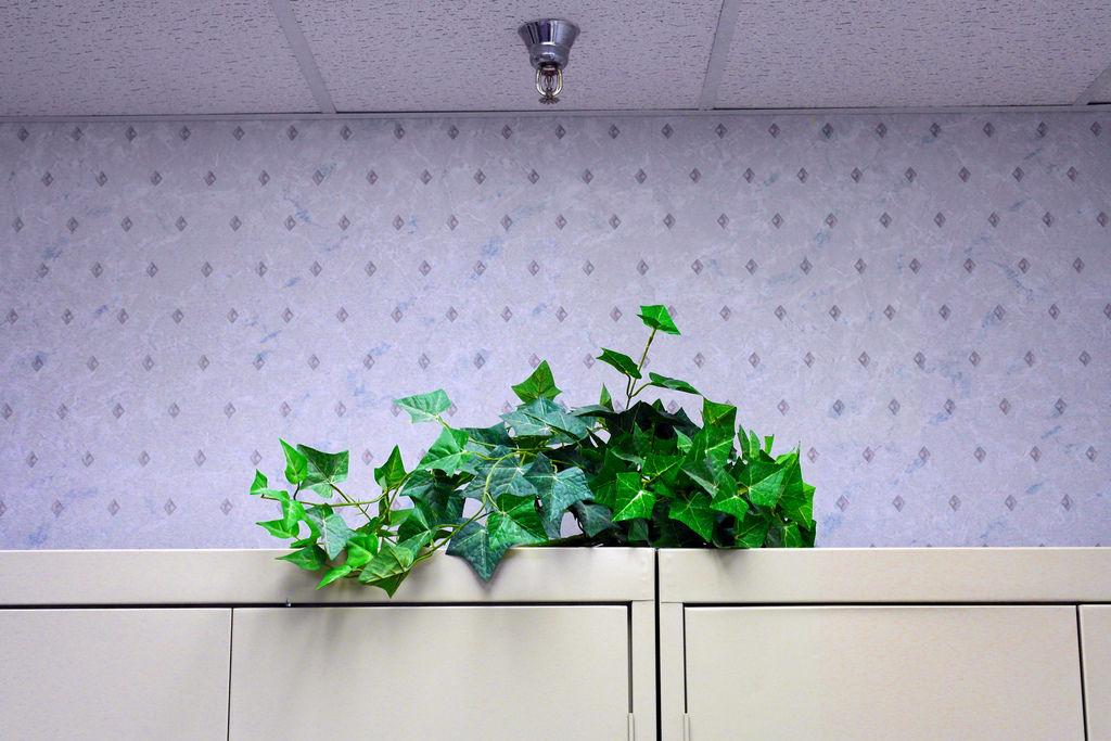 Img planta artificial