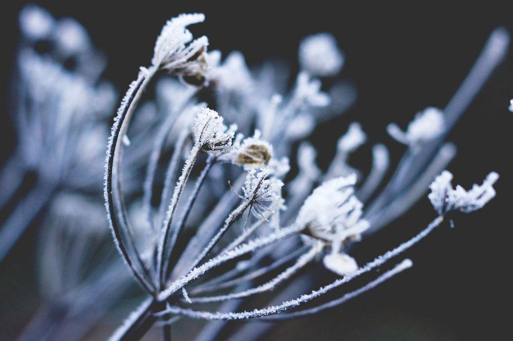 Img planta invierno
