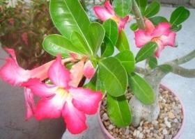 Img planta invierno art