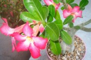 Img planta invierno list
