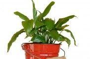 Img planta listado