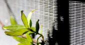 Img planta radiador