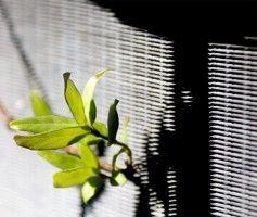 Img planta radiador articulo