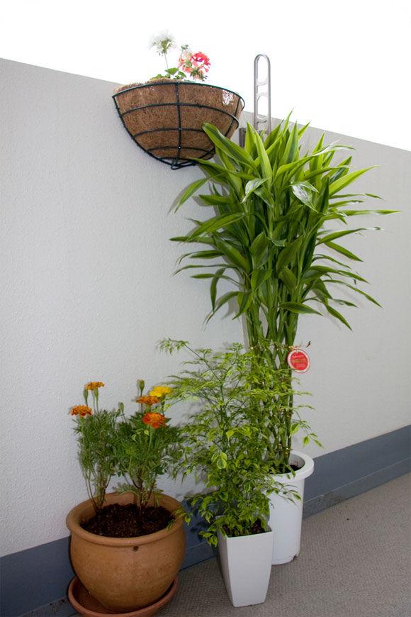 Img plantas