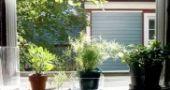 Img plantas calor list