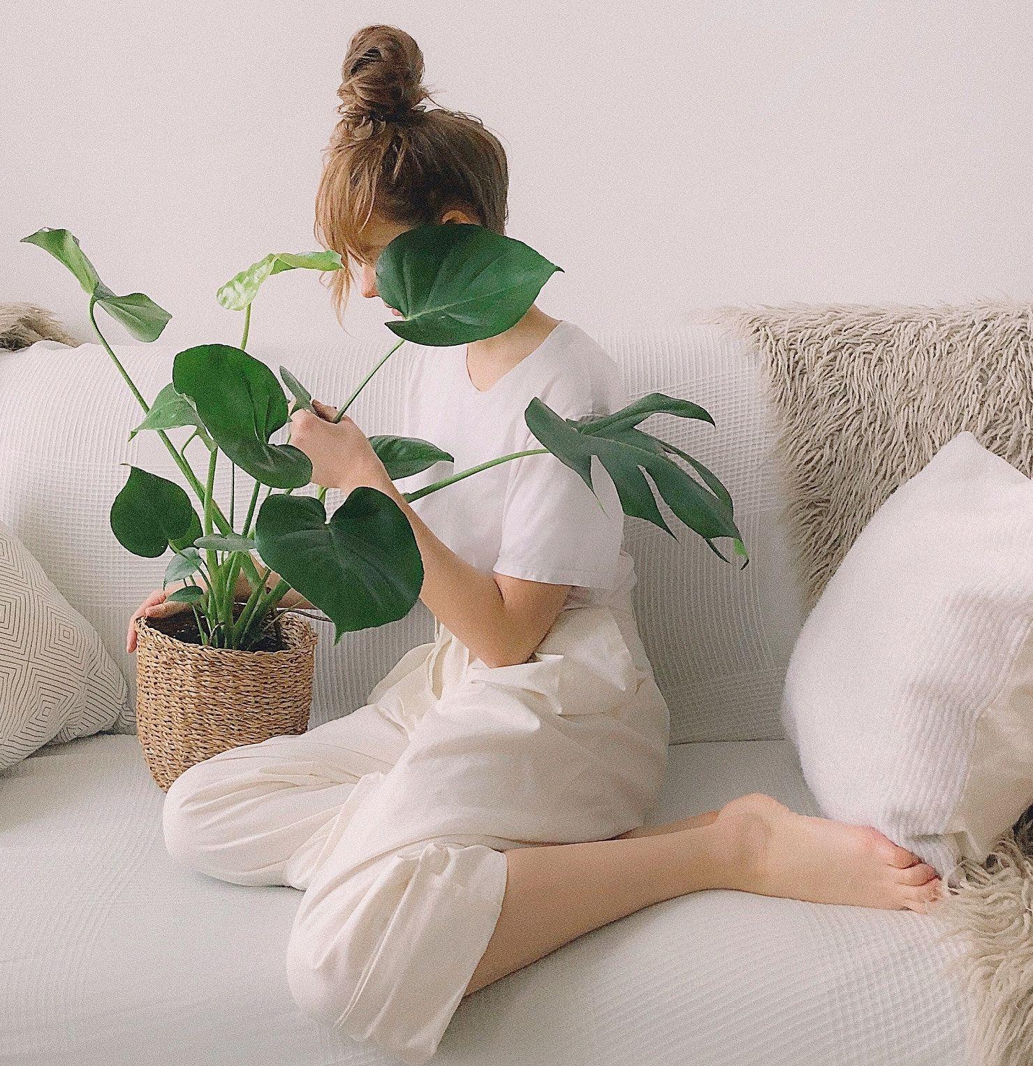 Img plantas casa aire limpio 3 art