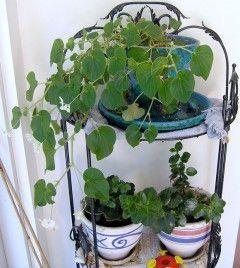 Img plantas interiordesp
