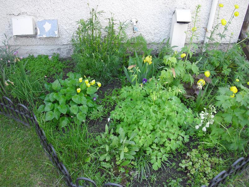 Img plantas jardin