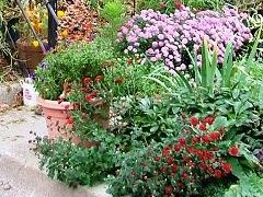 Img plantas patios art