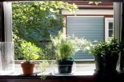 Img plantas verano list