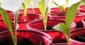 Img plantas list