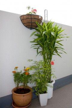 Img plantasdesp