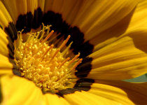 Img polen