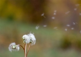 Img polen art