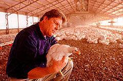 Img pollos2