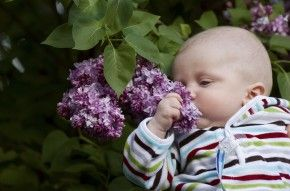 Img primero huele bebe arti