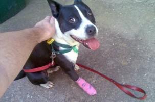 Img primeros auxilios animales mascotas perros botiquin medicinas art